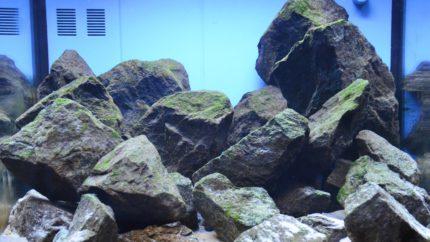 2015_biotope_aquarium_a_5_1