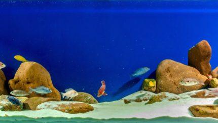 2015_biotope_aquarium_a_7_1
