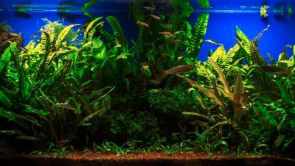 2015_biotope_aquarium_ao_3_1