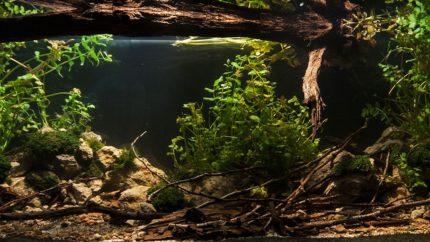 2015_biotope_aquarium_e_14_1