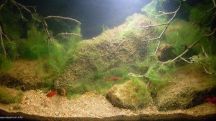 2015_biotope_aquarium_e_1_1