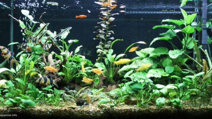 2015_biotope_aquarium_e_3_1