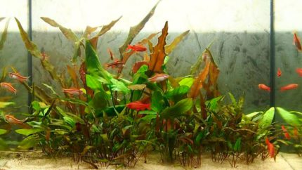 2015_biotope_aquarium_e_4_1