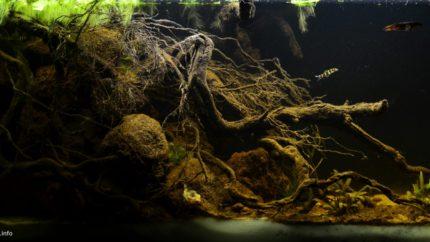 2015_biotope_aquarium_e_7_1