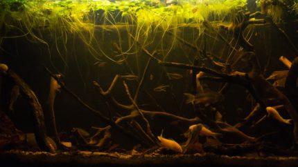 2015_biotope_aquarium_sa_14_1