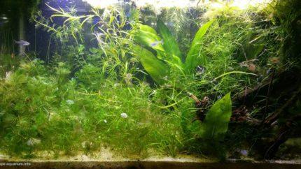 2015_biotope_aquarium_sa_19_1