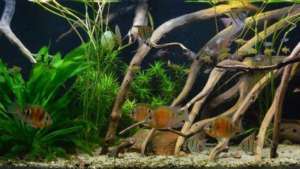 2015_biotope_aquarium_sa_1_1