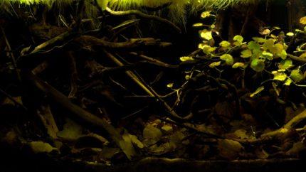2015_biotope_aquarium_sa_4_1