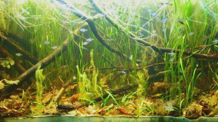 2015_biotope_aquarium_sa_6_1
