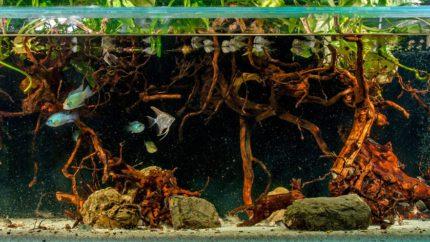 2015_biotope_aquarium_sa_7_1