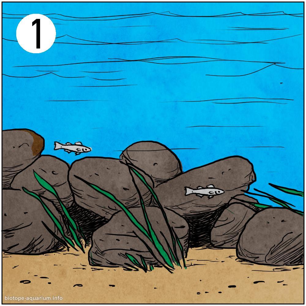 What is a biotope aquarium biotope aquarium for Aquarium poisson eau froide