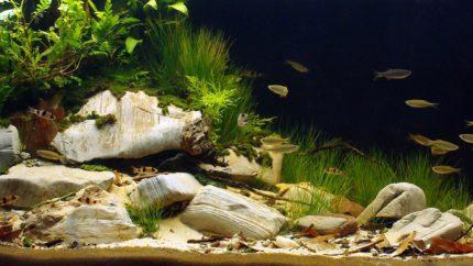 Biotope-aquarium-contest-1600-Chalakudy