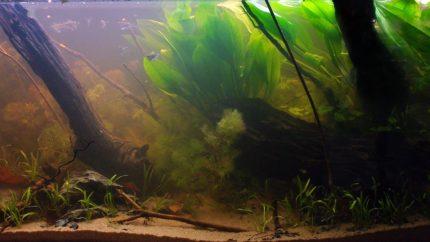 Biotope-aquarium-contest-1600-Essequibo