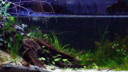 Biotope-aquarium-contest-1600-Ichetucknee