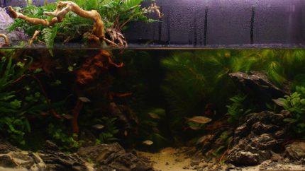 Biotope-aquarium-contest-1600-Sepik