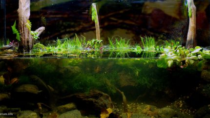 Biotope-aquarium-design-contest-2015-3