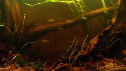 Biotope-aquarium-design-contest-2015-4