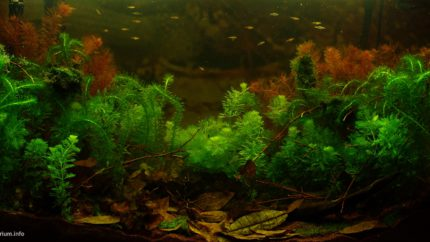 Biotope-aquarium-design-contest-2015-5