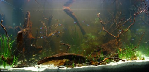 Biotope-aquarium_2012_6_final