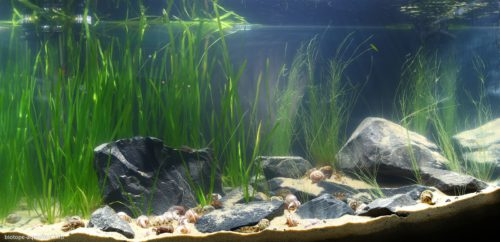 Biotope-aquarium_2012_7_final
