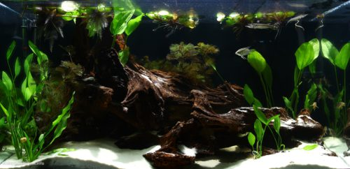 Biotope-aquarium_2012_8_final