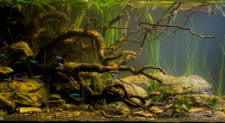 Japur 225 River At Dawn Colombia 180 L Biotope Aquarium