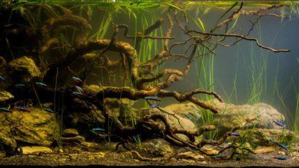 Biotope Aquarium Design Contest 2016 Biotope Aquarium