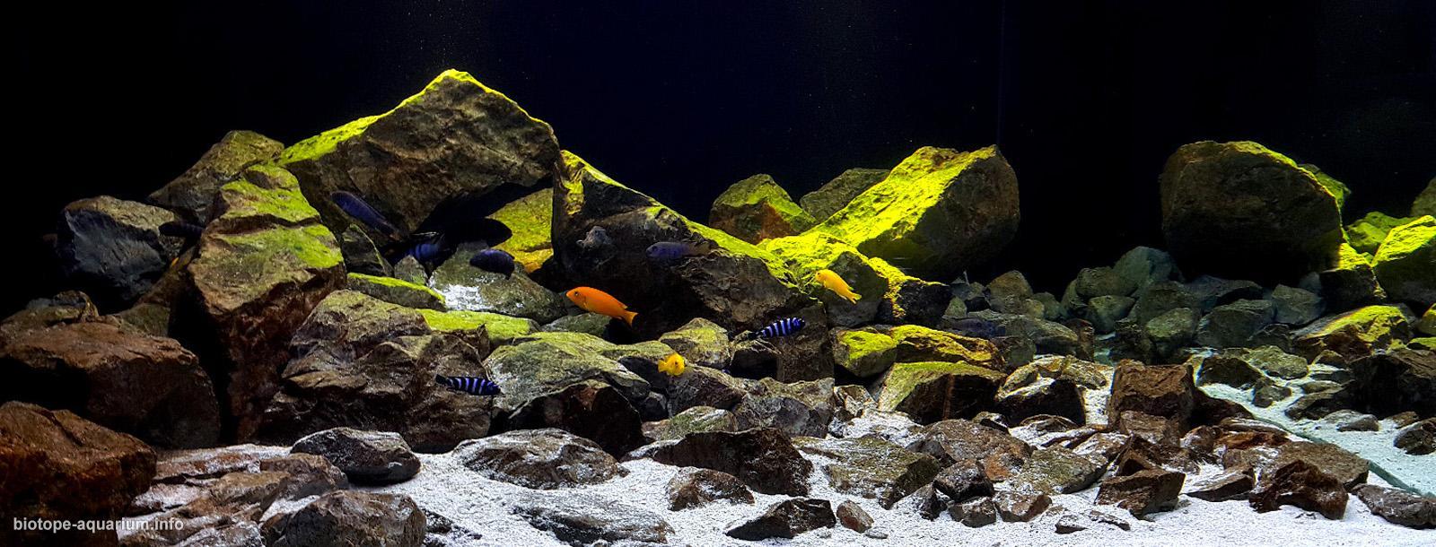 pflege eines aquariums