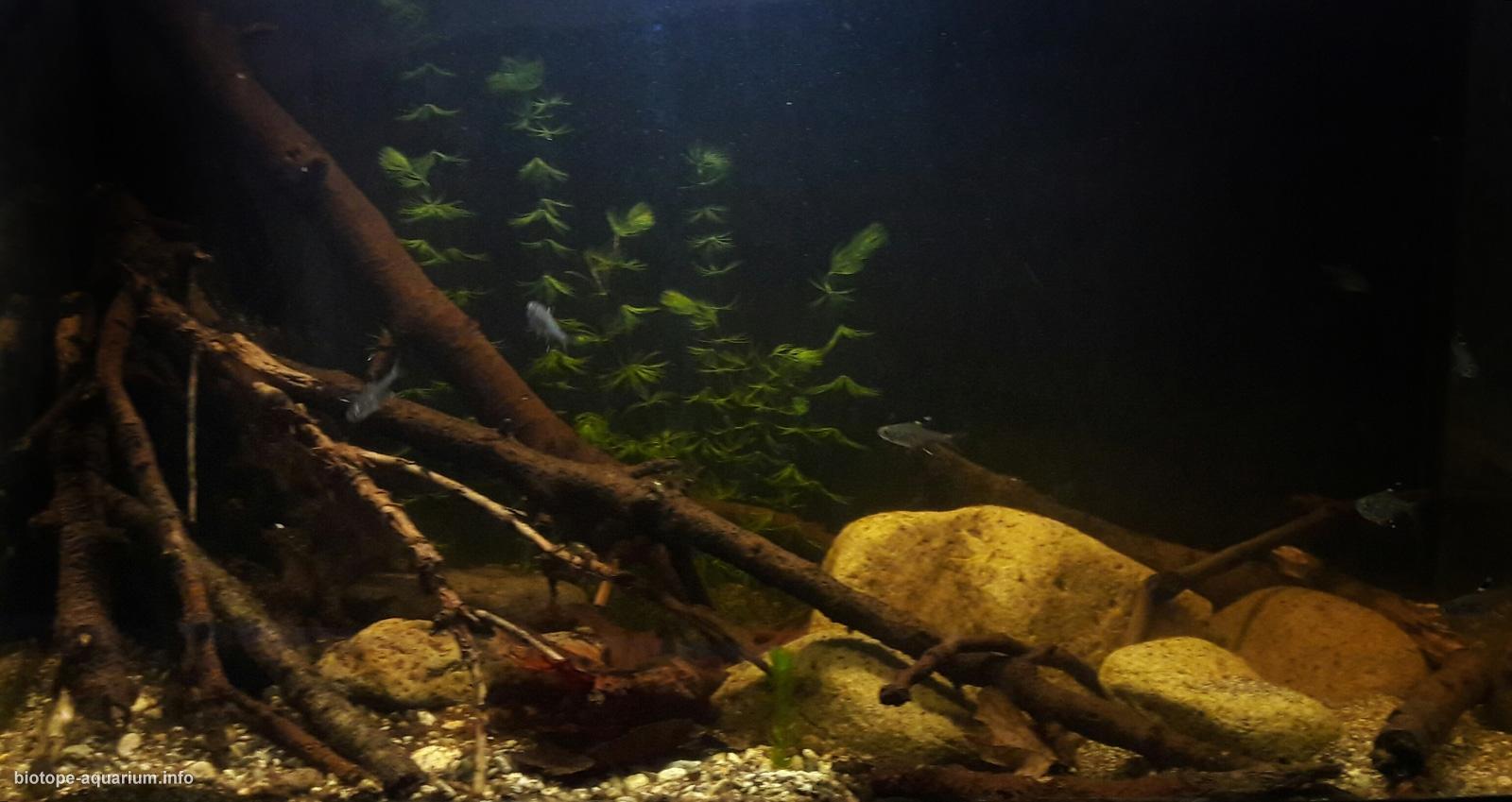 South America Amazon River Basin Orinoco River 40 L Biotope