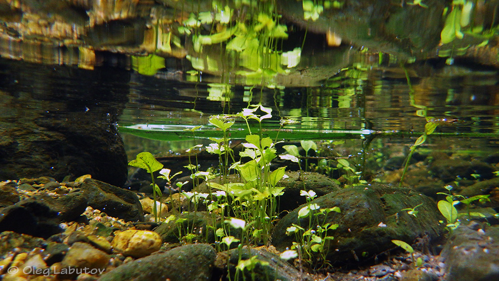 What Is A Biotope Aquarium Biotope Aquarium