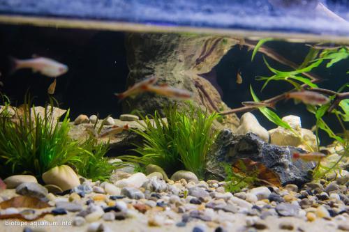 001_2013_biotope_aquarium_e_1_4