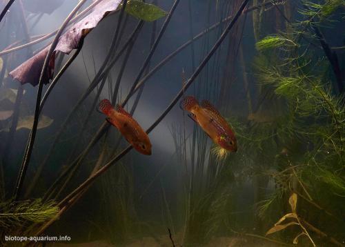 002_2013_biotope_aquarium_a_1_2