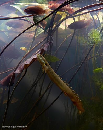 002_2013_biotope_aquarium_a_1_4