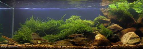 004_biotope-aquarium_e-1-1