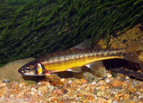 004_biotope-aquarium_e-1-2