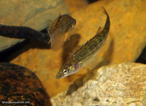 004_biotope-aquarium_e-1-4