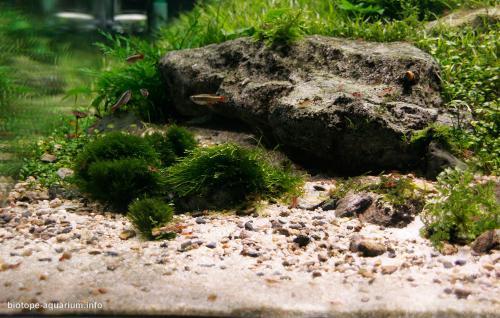 007_2013_biotope_aquarium_e_5_2