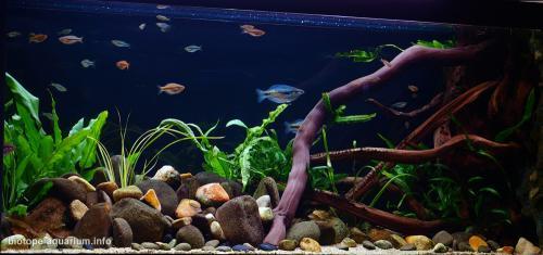 009_biotope-aquarium_ao-5-2