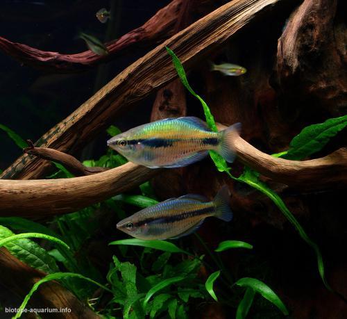 009_biotope-aquarium_ao-5-3