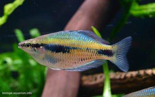 009_biotope-aquarium_ao-5-4