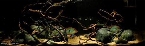 011_biotope-aquarium_sa-8-1