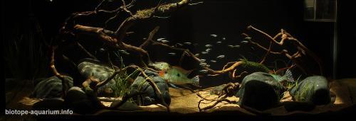 011_biotope-aquarium_sa-8-2