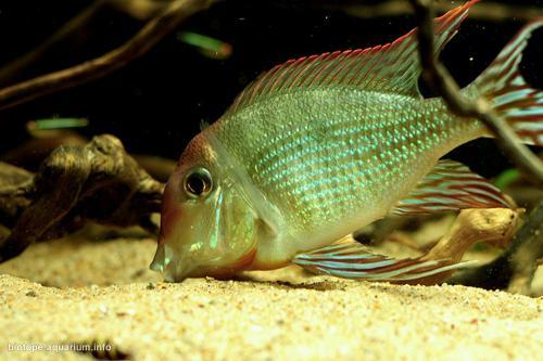 011_biotope-aquarium_sa-8-3