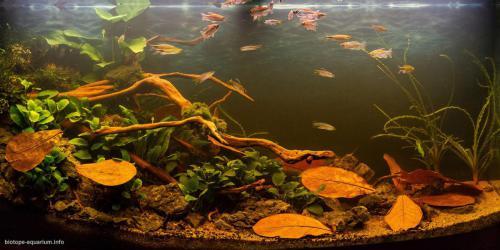 014_biotope-aquarium_a-6-1