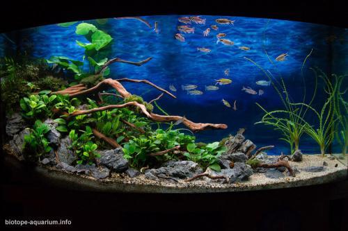 014_biotope-aquarium_a-6-3