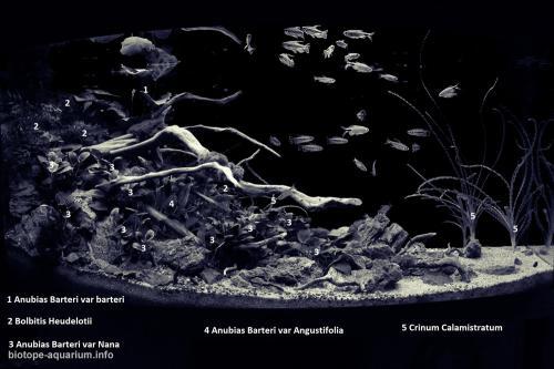 014_biotope-aquarium_a-6-4