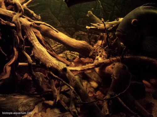 022_biotope-aquarium_sa-9-4