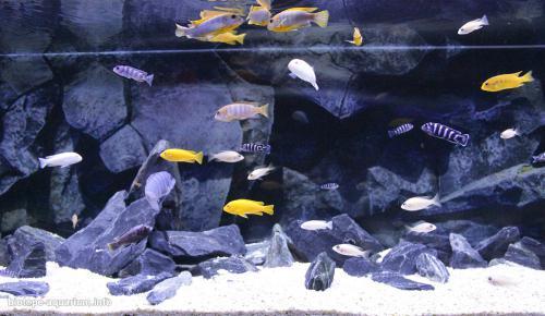 023_biotope-aquarium_a-8-3