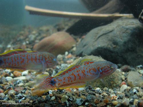 024_biotope-aquarium_ao-3-3