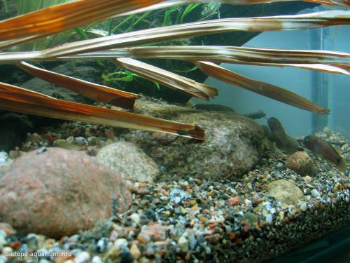 024_biotope-aquarium_ao-3-4